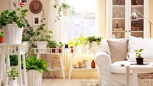 room with plants 7 plants you need to grow in your bedroom stylecracker