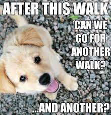 Cute Puppy Meme - top 79 funny and cute puppies memes funny dog dompict com