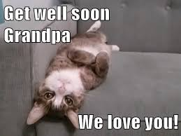 get well soon grandpa we love you lolcats lol cat memes