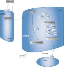 cardiovascular pharmacogenomics basicmedical key