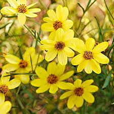 select and care for annuals and perennials
