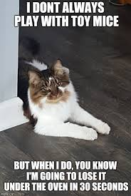 Cat Sitting Meme - meow time adventures in cat sitting