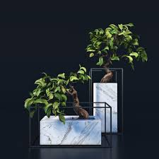 3d model bonsai trees cgtrader