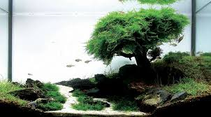 java moss how to grow carpets walls trees and more aquascape