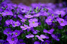 blue and purple flowers purple flowers free pictures on pixabay