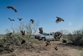hunting truck for sale texas quail rigs