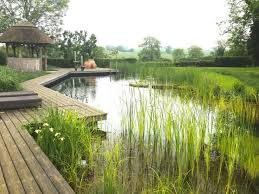 Natural Swimming Pool 192 Best Natural Swimming Pools Images On Pinterest Natural