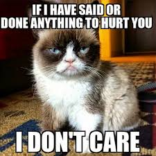 I Don T Care Meme - 16 of the best grumpy cat memes catster