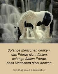 pferde spr che pferdespruch 1 pferde unsere leidenschaft