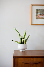 easy house plants that keep you company but don u0027t take your time