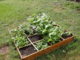 raised bed vegetable garden ideas buythebutchercover com