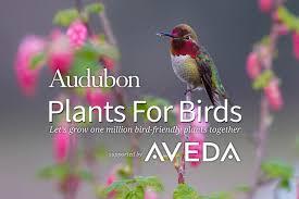 bird friendly native plants audubon plants for birds aveda pop up seward park audubon center