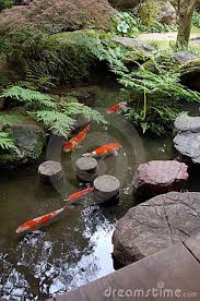Types Of Fish For Garden Ponds - zen koi ponds nursery the pond of a japanese zen garden with