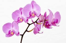 orchid pictures orchid flower images free stock photos 11 063 free stock