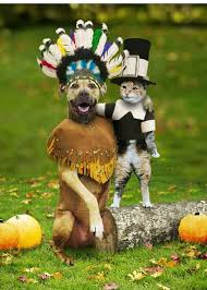 adorable dogs celebrate thanksgiving fancast