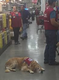 Lowes Hardware San Antonio Tx Texas Lowe U0027s Hires Retired Vet And His Service Dog Now An