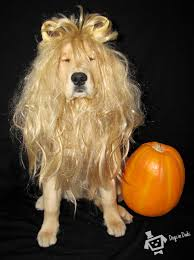 Cowardly Lion Costume A Cowardly Lion U2013 Dogs In Duds