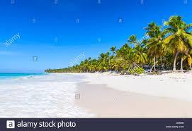 palms trees grow on sandy beach caribbean sea dominican republic