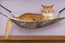 these are the best cool cat hammock beds pet lovers world