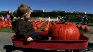 Local Pumpkin Farms In Nj by Pumpkin Picking At The Long Island Pumpkin Farm Enjoy Pumpkin