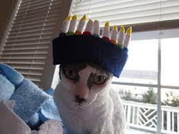 hannukah hat 25 cutest pets celebrating hanukkah smosh