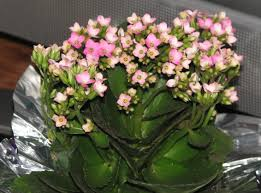 fresh stunning succulent flowers and plants 7113