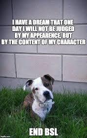 american pitbull terrier uk law 184 best b s l bullshit law images on pinterest pit bulls