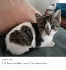 Cute Kittens Meme - cute my former foster kitten is now my frida stealer of hearts