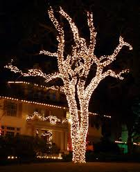 tree tree trunk lights tree trunk