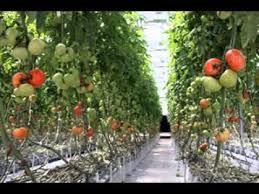 good vertical vegetable gardening ideas youtube