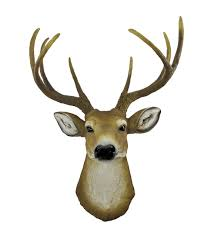 Stag Head Home Decor Amazon Com 8 Point Buck Deer Head Bust Wall Hanging Home U0026 Kitchen