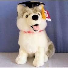 dog graduation cap sold out 12 grey husky w graduation cap