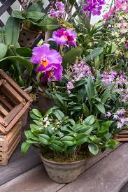 the orchid show orchidelirium opens february 27 at the new york