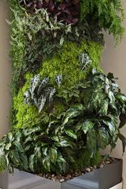Indoor Garden Wall by 197 Best Green Walls Images On Pinterest Vertical Gardens