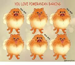 Pomeranian Meme - you love pomeranian barking meme on me me