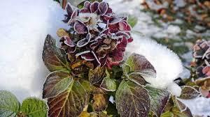 winterharte pflanzen balkon winterharte kübelpflanzen diese pflanzen können draußen bleiben