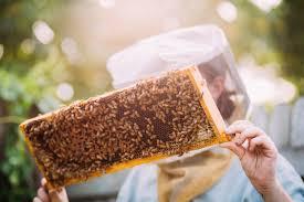 beekeeping like a hive mates jana kinsman of bike a bee