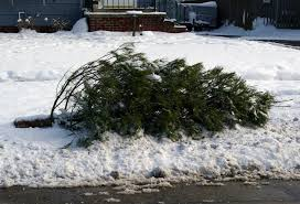 simple ideas christmas tree removal city of freeport pick up