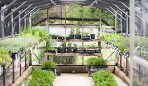 gardening start small at home a blog by joanna gaines