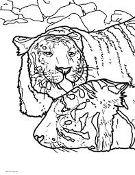 tiger coloring pages powerful pussycats