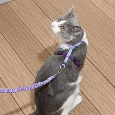 cat harness u0026 lead come with me kitty harness u0026 bungee leash at
