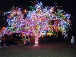 lighting displays amazing tree covered with thousands