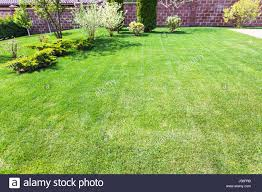 well groomed lawn with decorative bushes on backyard of country