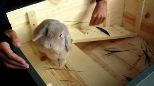 Homemade Rabbit Hutch Home Made Bunny Cage Youtube