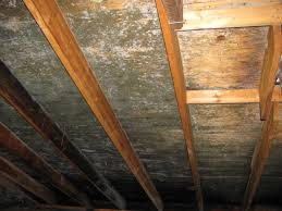 Black Mould In Bathroom Dangerous Attic Mold Remediation Experts Toxic Black Mold Removal Ma
