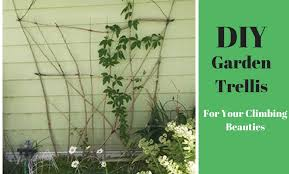 Trellis For Climbers How To Make Your Own Rustic Trellis Diy