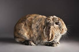 rabbit bunny rabbit communication basics