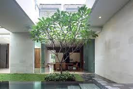frangipani tree google search new home eureka street