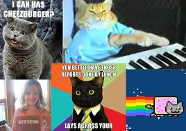 cats memes every techie should know pcmag com