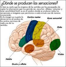 significado de imagenes sensoriales wikipedia psicología general sensaciones niveles o umbrales sensoriales